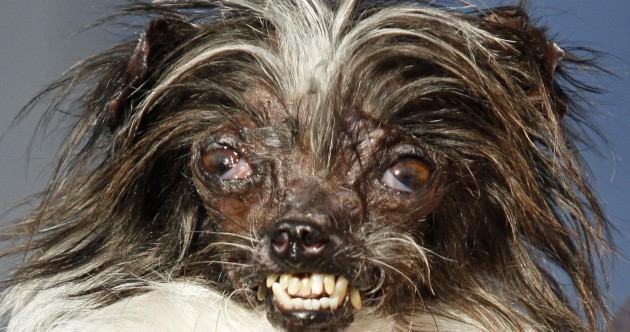 Meet this year's leading contestants for World's Ugliest Dog
