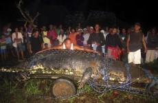 21-foot 'man-eating' crocodile caught in Philippines may be world's largest