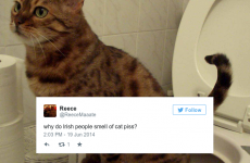 14 questions Irish people need to answer immediately