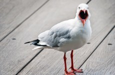 The UK wants to take on 'aggressive' seagulls
