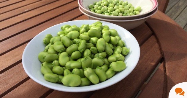 It took 4 hours' work to get these peas and broad beans - but growing your own is worth it