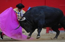 Spanish bullfighter in serious condition after being gored in groin