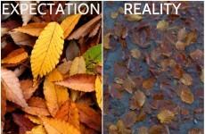 Irish Autumn: Expectations Vs The Unavoidable Reality