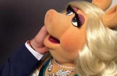 Looks like Miss Piggy's moving on....