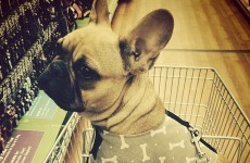 12 people you're bound to see while doing the Big Shop