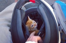 This motorcylist stopped to save a kitten stuck in the middle of a busy road