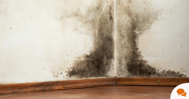 'I've lived in a house with mould, damp and sewage, until I said, no more'