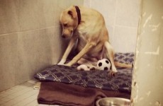 This heartbreaking photo of an 'abandoned' dog will melt your heart