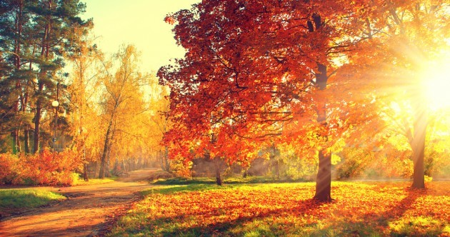 October was the driest in five years and broke sunshine records