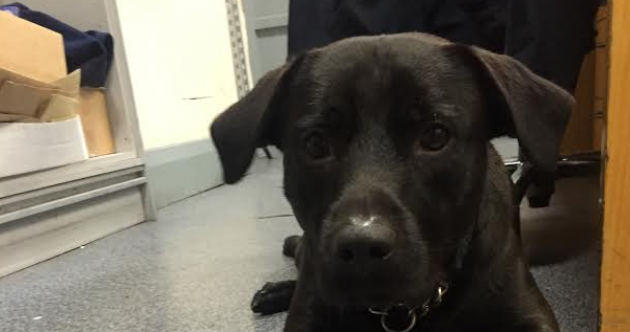 Gardaí have taken in this dog and named him Riggs - but they want to find his owner