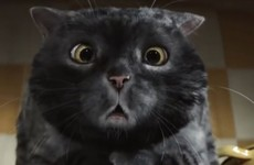 This calamity-prone cat has been a hit with viewers in the battle of the Christmas ads