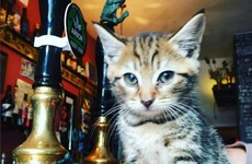 Here's what it's like inside the world's first 'cat pub'