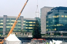 This massive 50ft Christmas tree just went up in Dublin