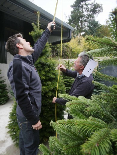 Christmas trees are going to make Ireland €21m this year