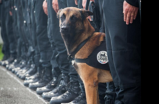 People have been honouring the police dog killed in yesterday's Paris raid