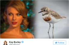 Here's why Taylor Swift has been accused of endangering rare birds