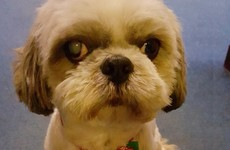 Gardaí in Tallaght found the most dapper little pup in Dublin