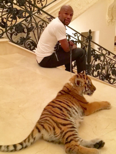 Floyd Mayweather now owns a baby tiger