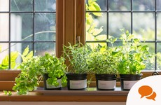 Here's how to grow the most popular herbs that will save you cash