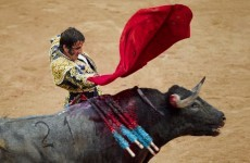 Video: Bullfighter survives being gored through the face