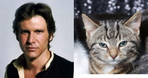 Charity hopes to find homes for kittens abandoned on Christmas Eve – by naming them after Star Wars characters