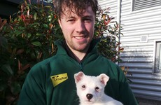 Animal charity fear this lost puppy was abandoned Christmas gift