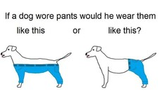 This baffling question about a dog wearing trousers has taken over Twitter