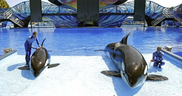 SeaWorld sues California so it can keep breeding killer whales