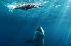 Swimmer mauled in shark attack near Brisbane, Australia