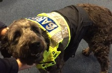 The gardaí found an adorable dog and lost the run of themselves on Twitter