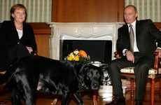 Putin denies trying to scare Angela Merkel with his dog