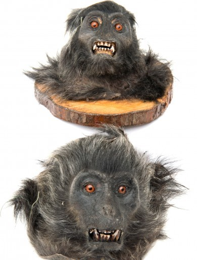 London man sentenced for having bestiality images and selling monkey heads on eBay