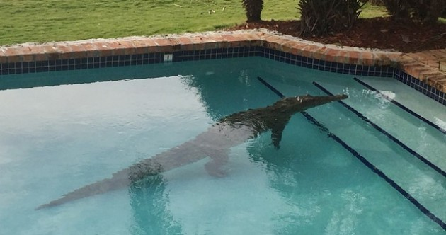 Man wakes up to find 8-foot crocodile in his swimming pool