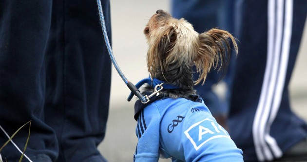 Dublin dogs and January trophies – the best pictures from the GAA weekend