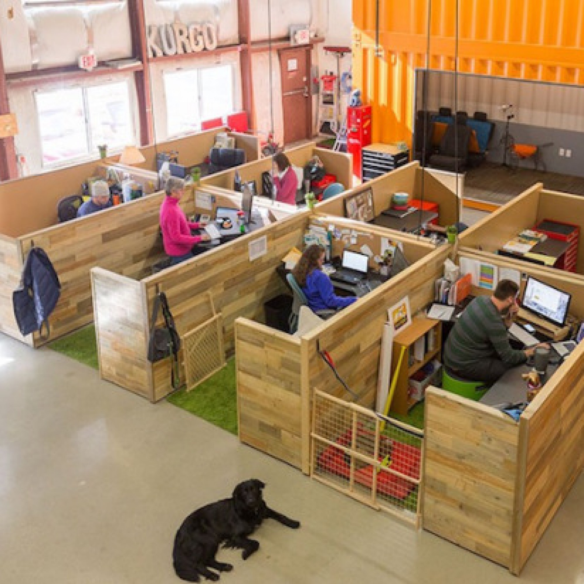 This office is the most dog-friendly workplace that's ever existed