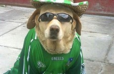 19 times Irish dogs were the coolest