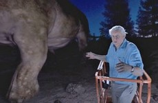 Watch David Attenborough meet the biggest animal ever to walk on Earth