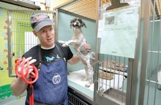 This man gives free haircuts to shelter dogs so they'll get adopted