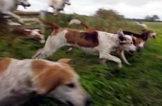 Hundreds sign petition protesting against fox-hunting internship on JobBridge