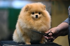 15 adorable dogs that stole the show at Crufts this year