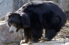 Bear shot dead after killing two villagers in a rampage