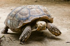 Poachers stopped with half a tonne of tortoises and snakes