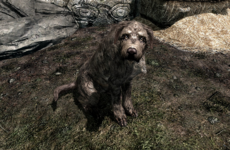 This guy's story of adopting a dog on Skyrim has touched the internet's heart