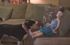 Take a break and watch this dog trying to get a doll to play fetch