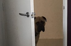 A woman documented how much her adorable dog creeps on her