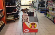 Take a break and check out this supermarket which invites customers to bring their dogs shopping
