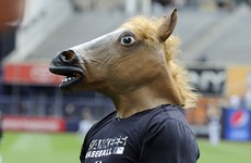 Move over Boaty - here comes a horse named Horsey McHorseface