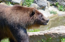 Outdoor Studies professor mauled by bear during mountaineering class