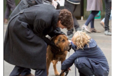 Cumberbatch just filmed Sherlock scenes with an amazing dog... It's The Dredge
