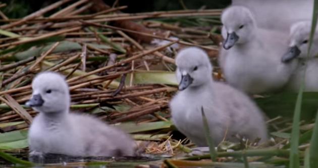 Hiding in plain sight: The secret life of wildlife in Irish cities unveiled
